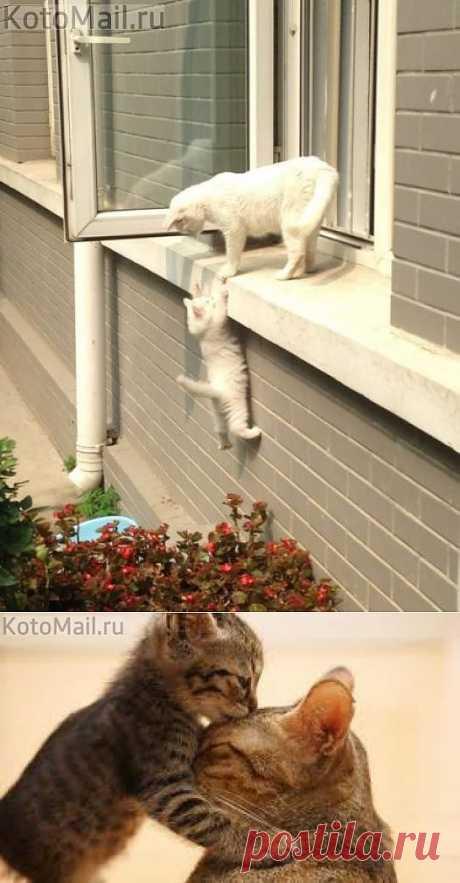 Помоги мне,мамочка ... | KotoMail.ru