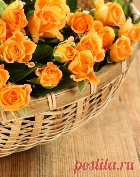 А если настроение оранжевого цвета, То волшебство и красота сегодня в Мире этом!