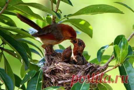 Мамочки-птицы рядом с детками