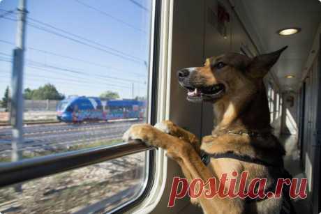 ✈ Как пережить длительное путешествие в поезде с собакой