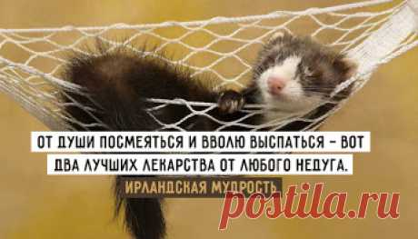 Здоровый сон https://www.doctorate.ru/zdorovyj-son-1-variant/
