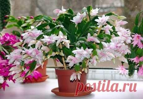 Маленькая хитрость: чтобы цветы в доме цвели пышно и долго! | 6 соток