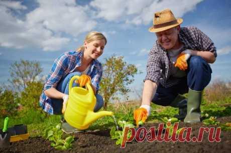 Народные приметы огородников Когда нельзя сажать и сеять согласно народным приметам