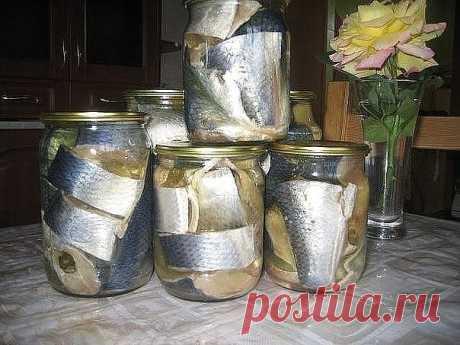 Засолка скумбрии и сельди — Золотые рецепты