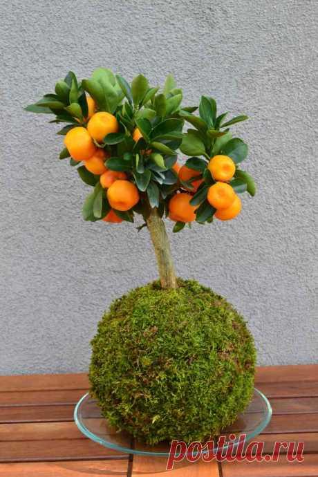 L' art floral japonais Kokedama pour apporter une touche zen à la maison