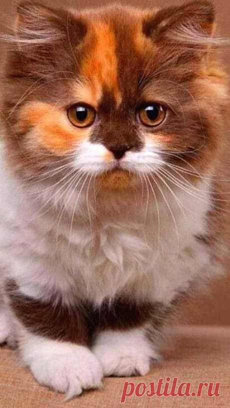 Солнечный котёнок.