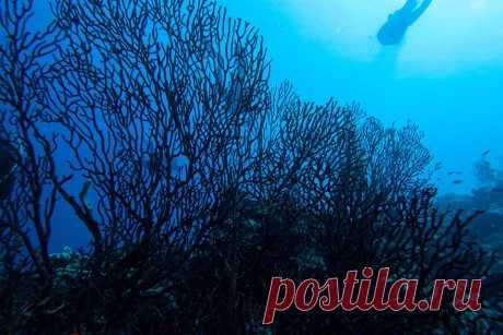 Климат канарских островов меняется | Тенерифе Сегодня