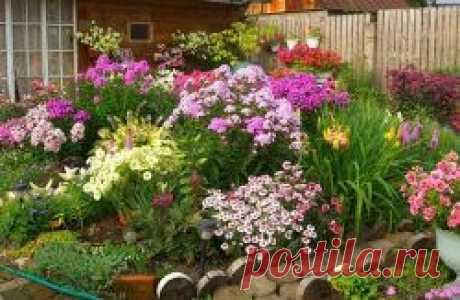 Создаём клумбу мечты: самые неприхотливые цветущие растения