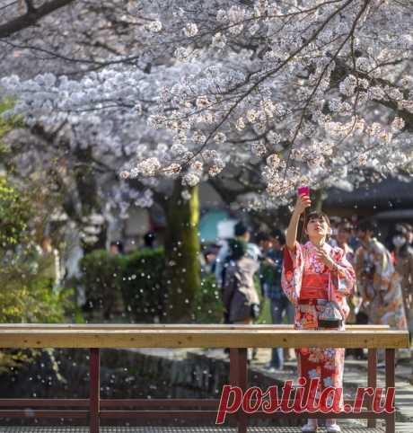 Любоваться цветением сливы, вишни и других растений – древняя традиция японцев, которая называется ханами. Приглашаем вас полюбоваться этим снимком: он завоевал приз зрительских симпатий на конкурсе «Моя Япония». Его автор – Михаил Воробьёв.