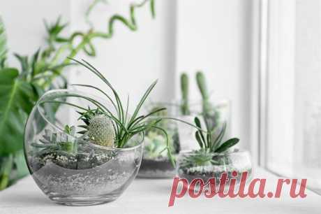 Как украсить дом цветами, если капризные в нем не растут: идеальные растения для любой комнаты (как их разместить в интерьере) + лучшие варианты декора для вашего дома! Как украсить дом цветами Каждый человек стремится наполнить дом красотой и гармонией. Это совершенно нормально. Но у многих на это просто нет времени, да и желания хватает лишь на самые простые вещи. А ведь на самом деле достаточно немного изменить свой образ жизни, чтобы сделать интерьер своего жилища более уютным и стильным.