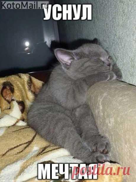 Как сладок сон! | KotoMail.ru