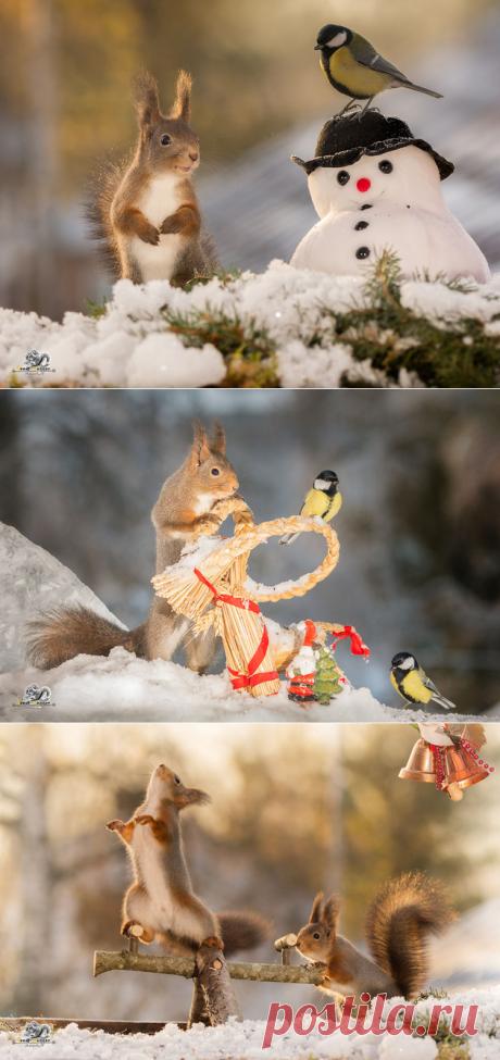 Забавные белочки в фотосессии Гирта Веггена — Фотошедевры