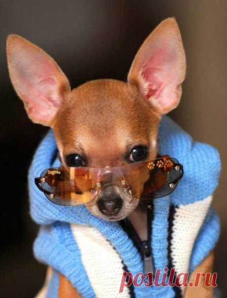 Простейшие выкройки комбинезонов для собак