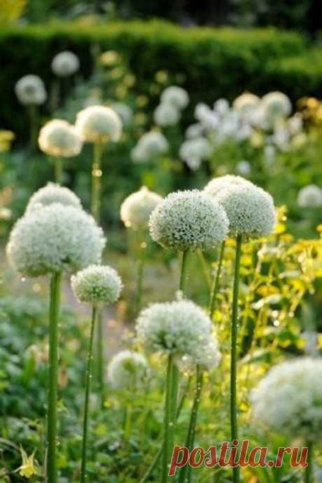 Я поздравляю вас с летом, с россыпью ярких цветов, С прелестью тёплых рассветов, с пеньем крылатых певцов. Много желаю вам счастья, в каждый из будущих дней, а коль случится ненастье- только из тёплых дождей!! Солнца! Уюта и света! Минимум - всяких проблем... Я поздравляю вас с летом!! Мира и радости всем!  Елена Дьяченко.