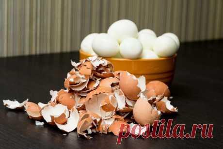 Что нужно знать об удобрении из яичной скорлупы