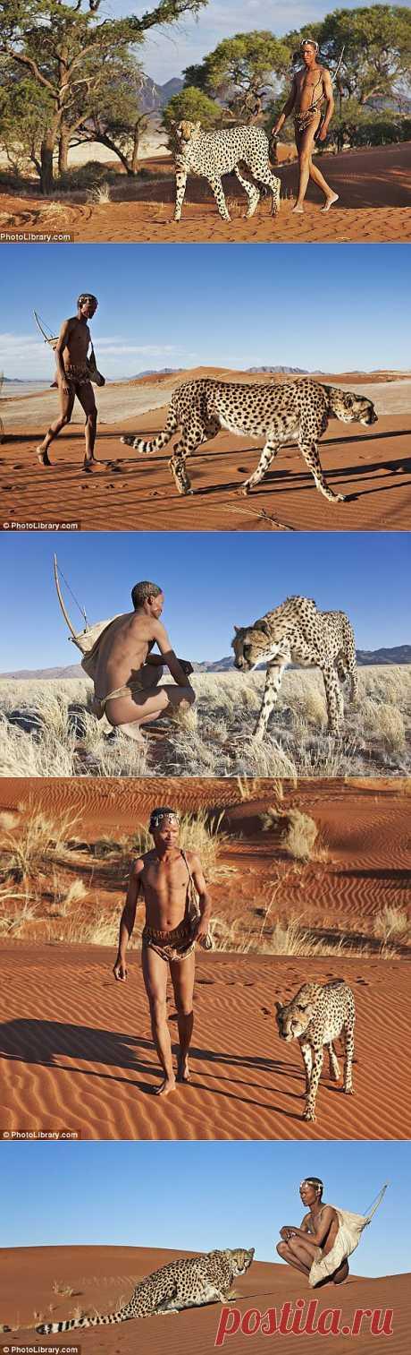 » Прогулка с гепардами Это интересно!