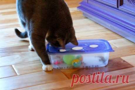 Игрушка для котов (Diy)