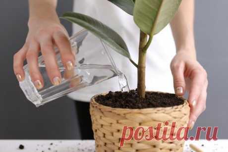 10 растений, которые лучше не полить, чем перелить. Уход в домашних условиях