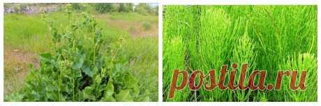 Научилась делать удобрение из травы, теперь даже не собираюсь покупать навоз, все и так отлично растет. Рассказываю | ТРИ ПОКОЛЕНИЯ | Яндекс Дзен