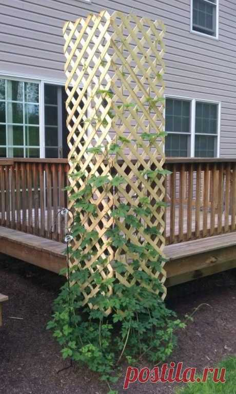 Beautiful ideas for your garden