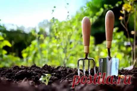 Растения, которые не любят перегной: 6 огородных культур, которые органикой не подкармливают - Дачный участок - медиаплатформа МирТесен