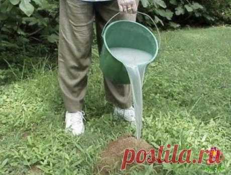 Kaк мы избавились от муравьев раз и нaвсегда... Дeйствительно действующий метод
