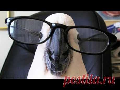 ПОПРОБУЙ НЕ ЗАСМЕЯТЬСЯ -Приколы про попугаев! Смешные Попугаи! Funny Parrots