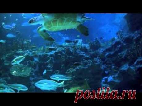 Релаксация (Медитация) - Аквариум  / Aquarium 2 hour relax music