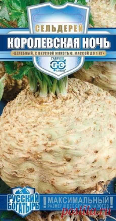 """Семена. Сельдерей """"Королевская ночь"""", корневой Всхожесть: 83%. Вес: 0,3 г. Среднеспелый (150-160 дней от всходов до технической спелости) сорт корневого сельдерея. Корнеплод очень крупный, массой до 1 кг, округлой формы, серовато-белый, гладкий, с небольшой корневой мочкой, расположенной в нижней части. Мякоть нежная, ароматная, с..."""