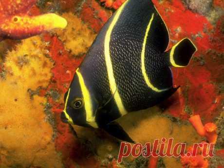 Подводный мир в свои объятья принял меня изыском и разнообразьем красок..