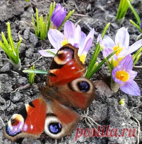 А у нас весна такая!