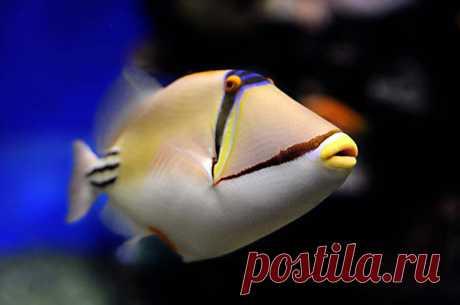 Красочные рыбки со дна океана (Всего 50 фото)