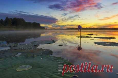 El ocaso en el lago de los lotos, la esfera De Khabarovsk. El autor de la foto — Konstantín Baydin: nat-geo.ru\/photo\/user\/118654\/
