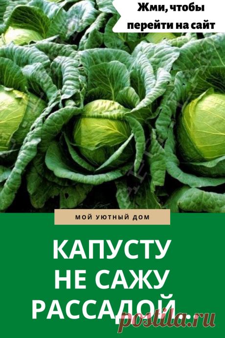 Как правильно садить капусту