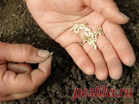 Выращивание огурцов по Лунному календарю в 2020 году | Огурцы (Огород.ru)