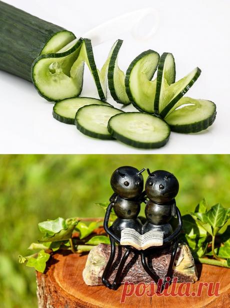Отличный способ, чтобы навсегда избавиться от муравьев дома и в саду. Единственное, что вам нужно, это огурец | В ЖИЗНИ это ПРИГОДИТСЯ | Яндекс Дзен
