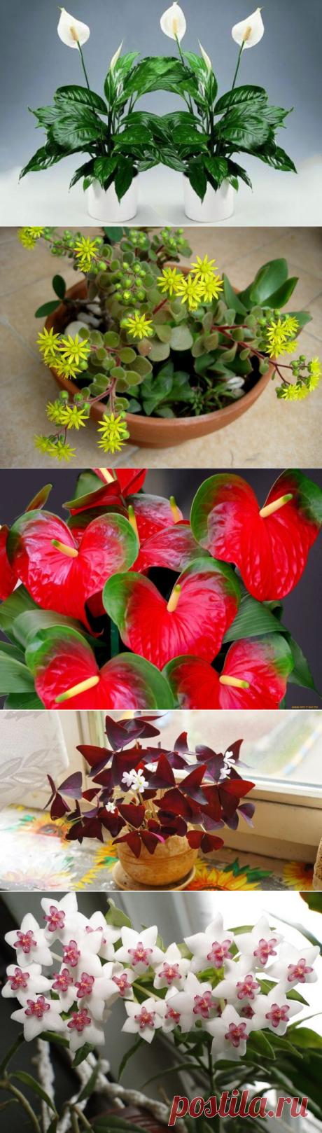 10 комнатных растений, которые принесут любовь и семейное счастье в ваш дом