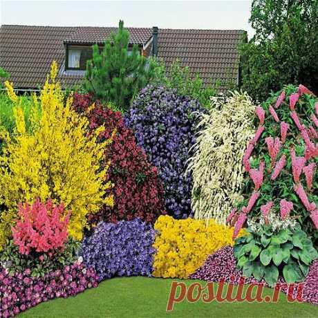 Часть 2.Красивые клумбы из многолетних цветов..