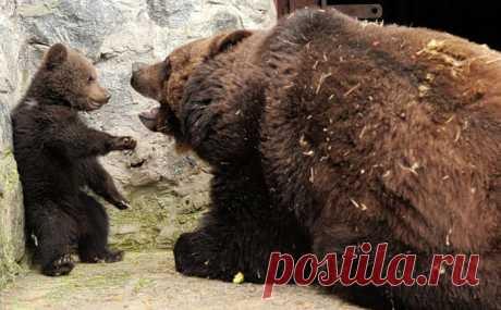 Медвежье воспитание
