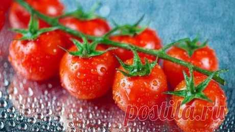 Как правильно поливать томаты в различные периоды развития