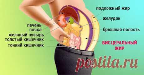 Полезные советы: Как убрать висцеральный жир