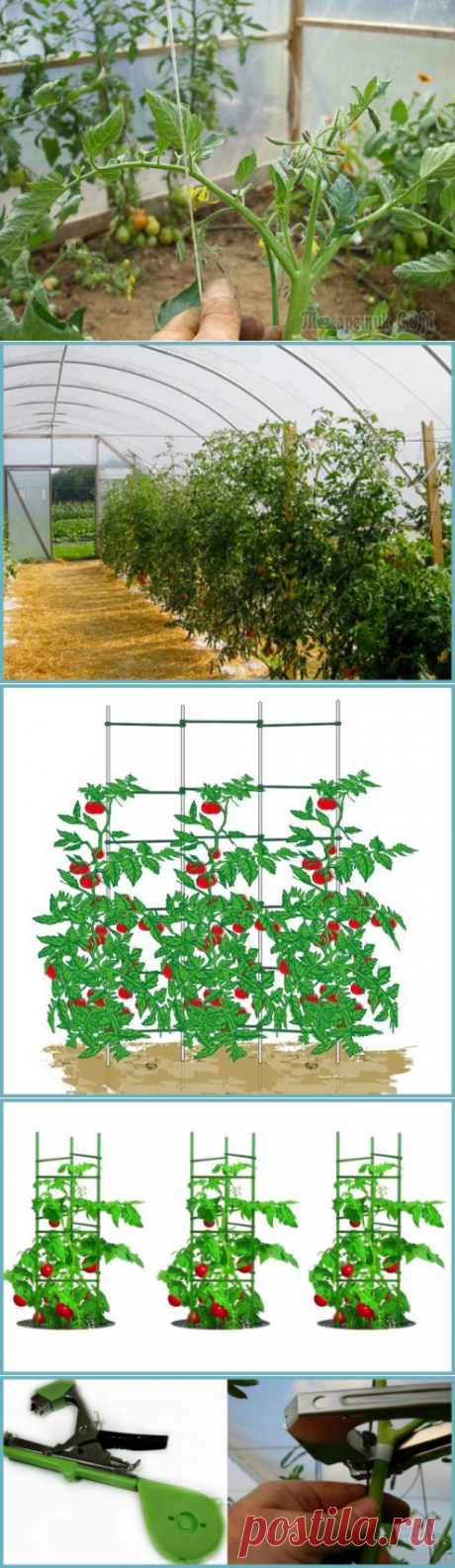 Как и для чего подвязывать томаты в теплице из поликарбоната