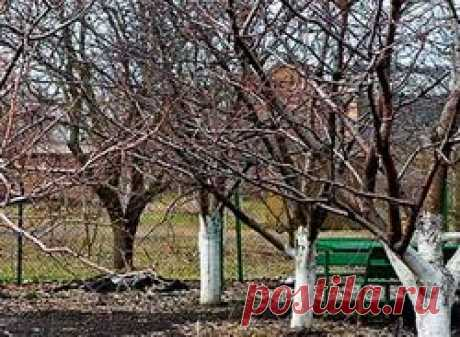 Уход за деревьями осенью: календарь, полив, удобрение, обрезка, фото, видео
