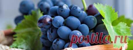 Лучшие сорта винограда для выращивания в средней полосе России с описанием, характеристикой и отзывами