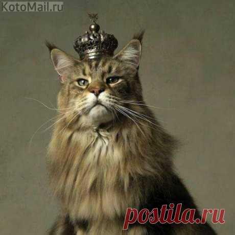 С короной царь на голове - он лев в миниатюре...