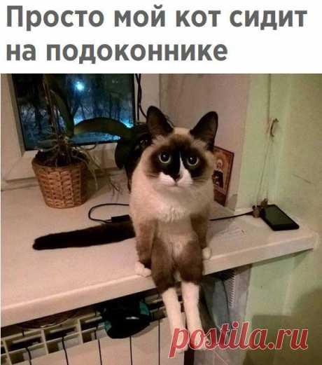 Смешные картинки с подписями (20 фото) В этой подборке вы найдете кота, используемого в роли держателя для телефона, историю необычного интернет-знакомства, пособие о том, как пить чай и так далее.