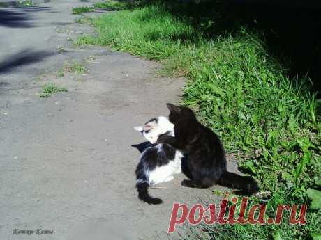 Котики-братики | Кошки & Коты | Яндекс Дзен  Маленькие кошачьи дети любят играть. Они, как и любые дети, активно познают окружающий мир, который для них нов и интересен. Ведь вокруг столько всего: люди, взрослые кошки, собаки, птички, трава и машины. Что-то вызывает любопытство, а что-то и пугает. Но если котенок не один, а со своими братьями и сестрами, ему уже не так страшно в этом непонятном мире, даже если мама-кошка отсутствует, отправилась, например, на охоту...