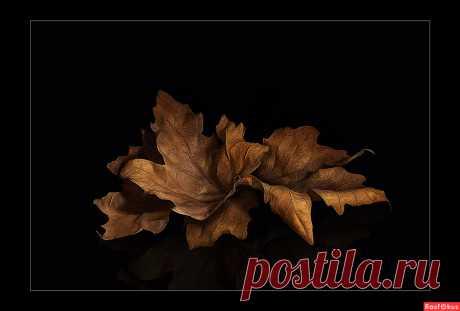 Фото: листья. старик. Натюрморт - Фотосайт Rasfokus.ru