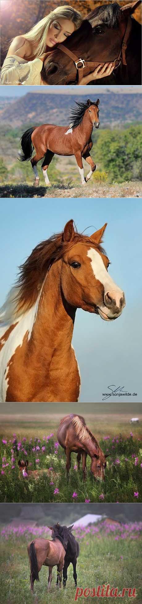 Если в раю не будет лошадей… (пост с музыкой).