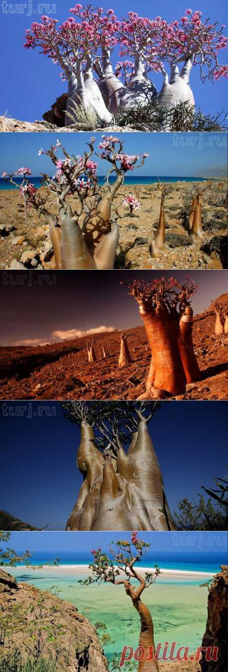 Юго-Западная Азия, Йемен, остров Сокотра – там, где природа отдыхает / Мировые Достопримечательности / Мировые достопримечательности. Фото достопримечательностей, идеи для путешествий. Туристический журнал.